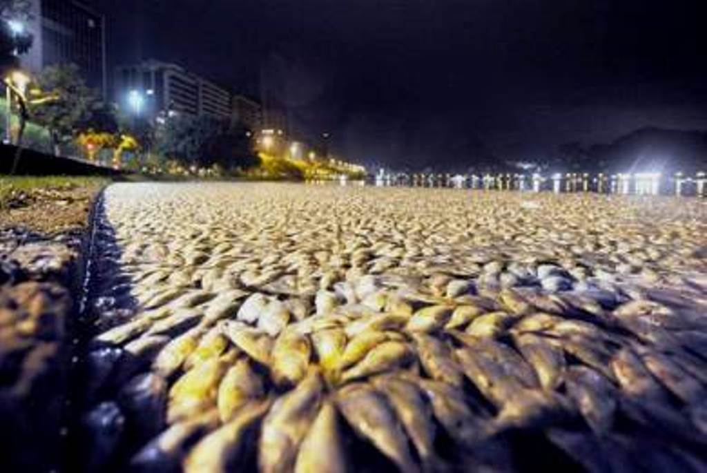 thousands-dead-fishes-brasil,